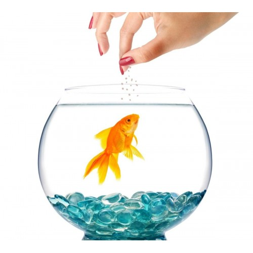 OEM PRODUCTS FEED FOR GOLDFISH