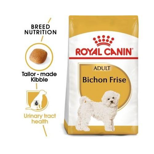 Bichon Frise Adult