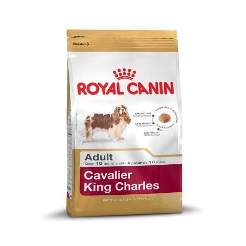 Cavalier Adult 1.5kg