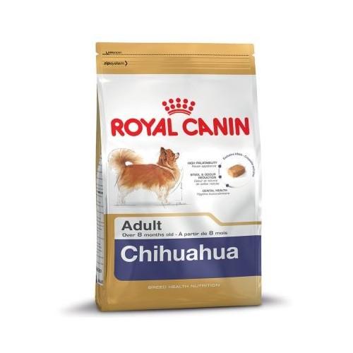 Chihuahua aduld 1,5kg