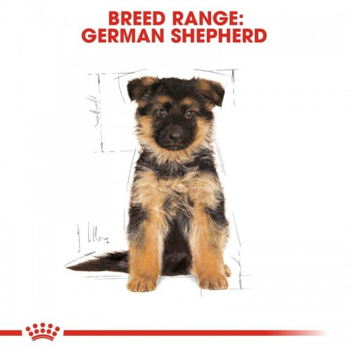 German Shepherd puppy 3kg