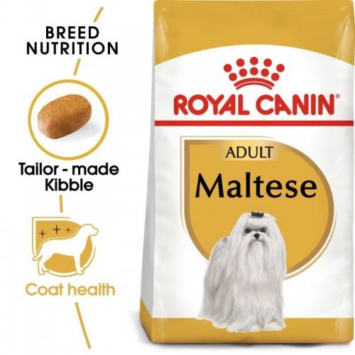Maltese Adult  1,5kg