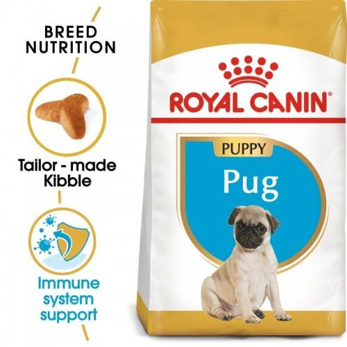 Pug Puppy 1,5kg