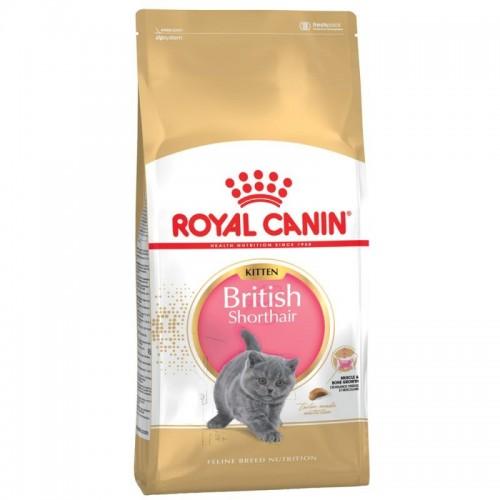 FBN British Shorthair Kitten 2kg