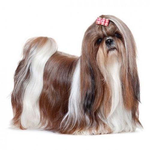 SAMPOO LONG HAIR